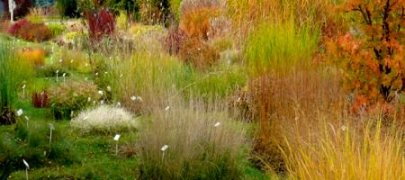 a 1 Obraz1 ogrod botaniczny