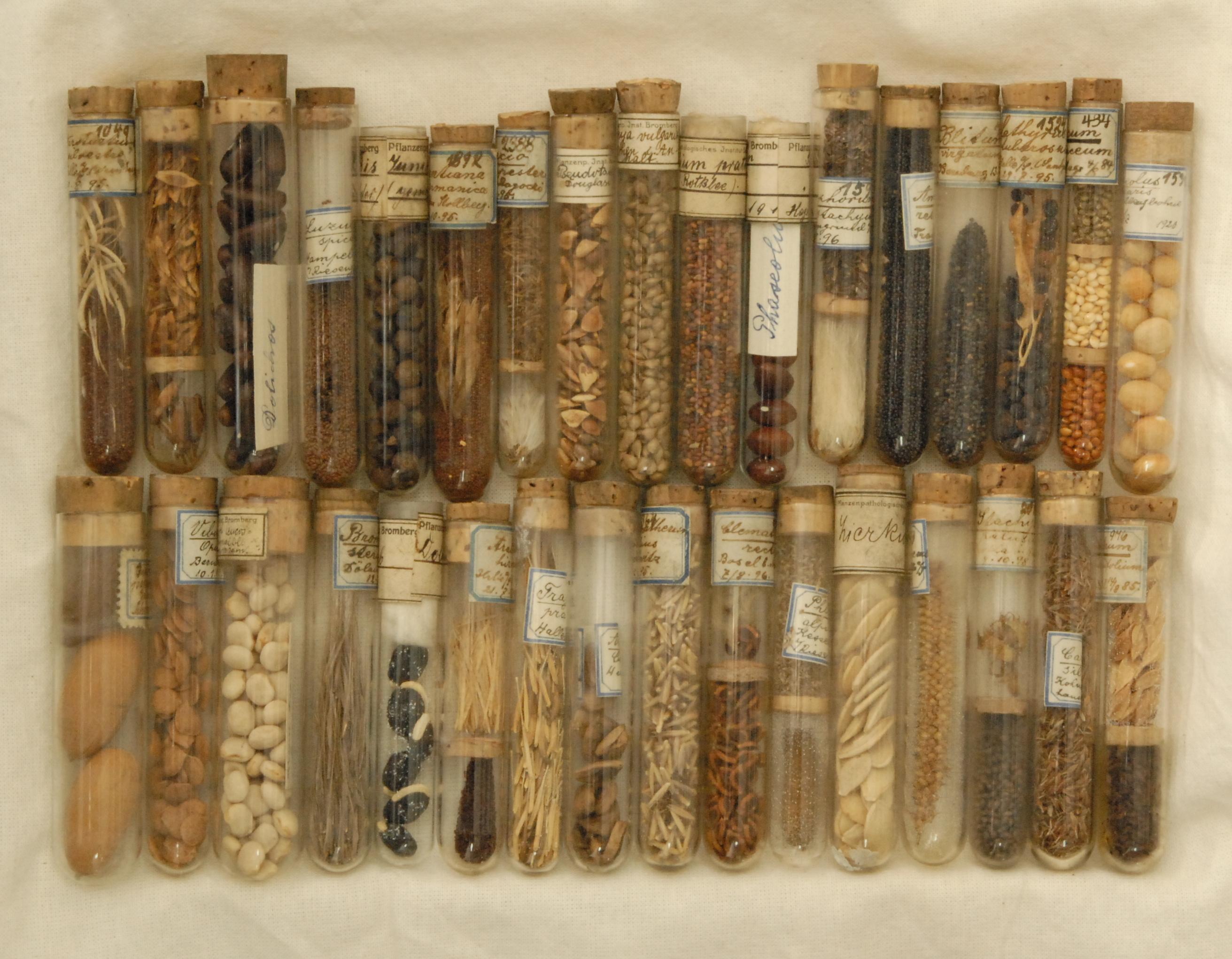 Fiolki z nasionami herbarium